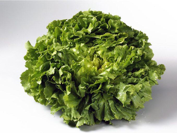 Salate haben immer Saison © Wirths PR